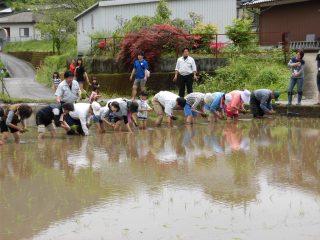 コープみやざき 「五ヶ瀬田植え交流会」に参加しました。