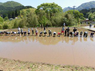 コープみやざき 平成30年度「五ヶ瀬田植え交流会」に参加しました。